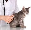 Ветеринарные клиники в Байконуре